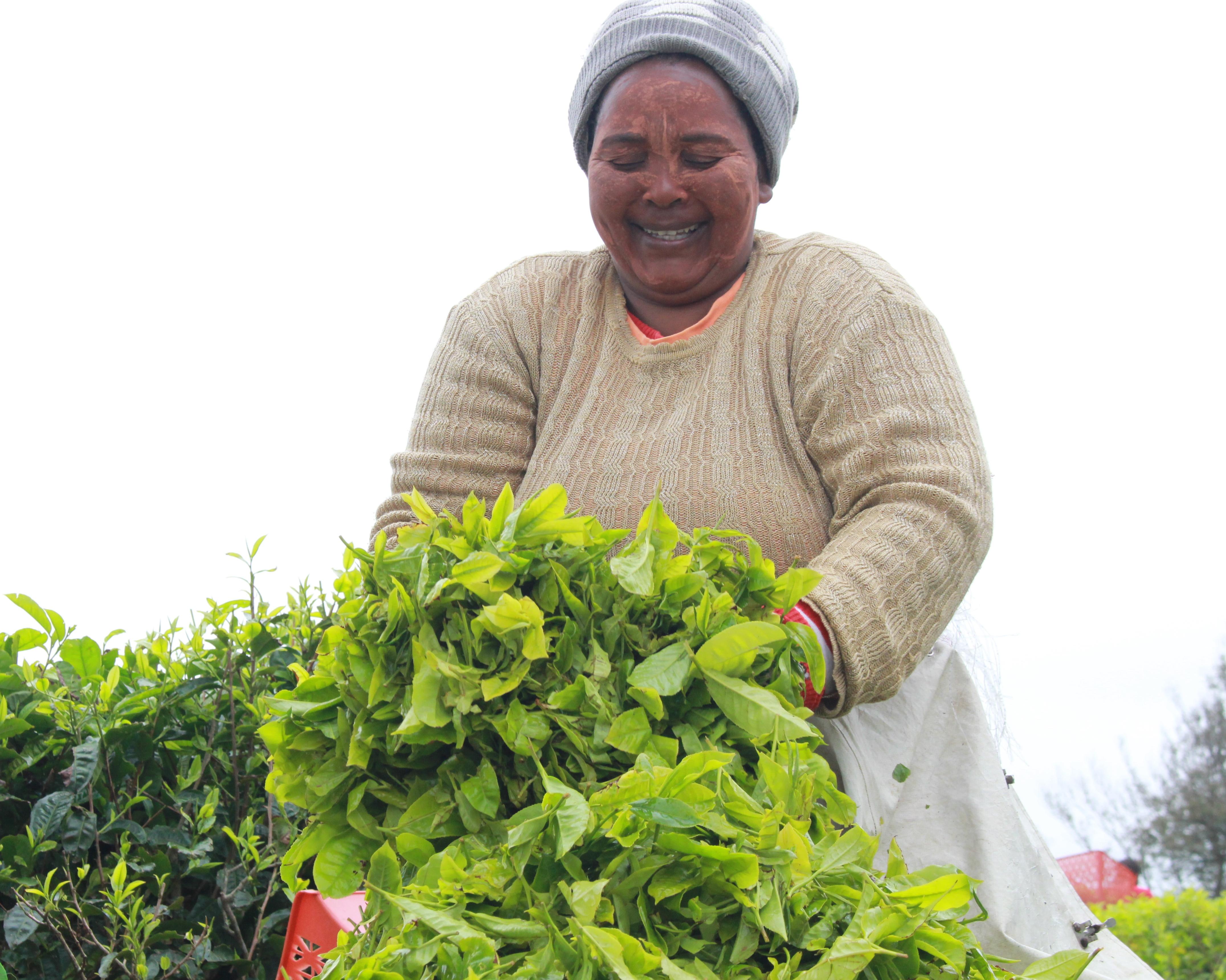 Agriculture Economic Services
